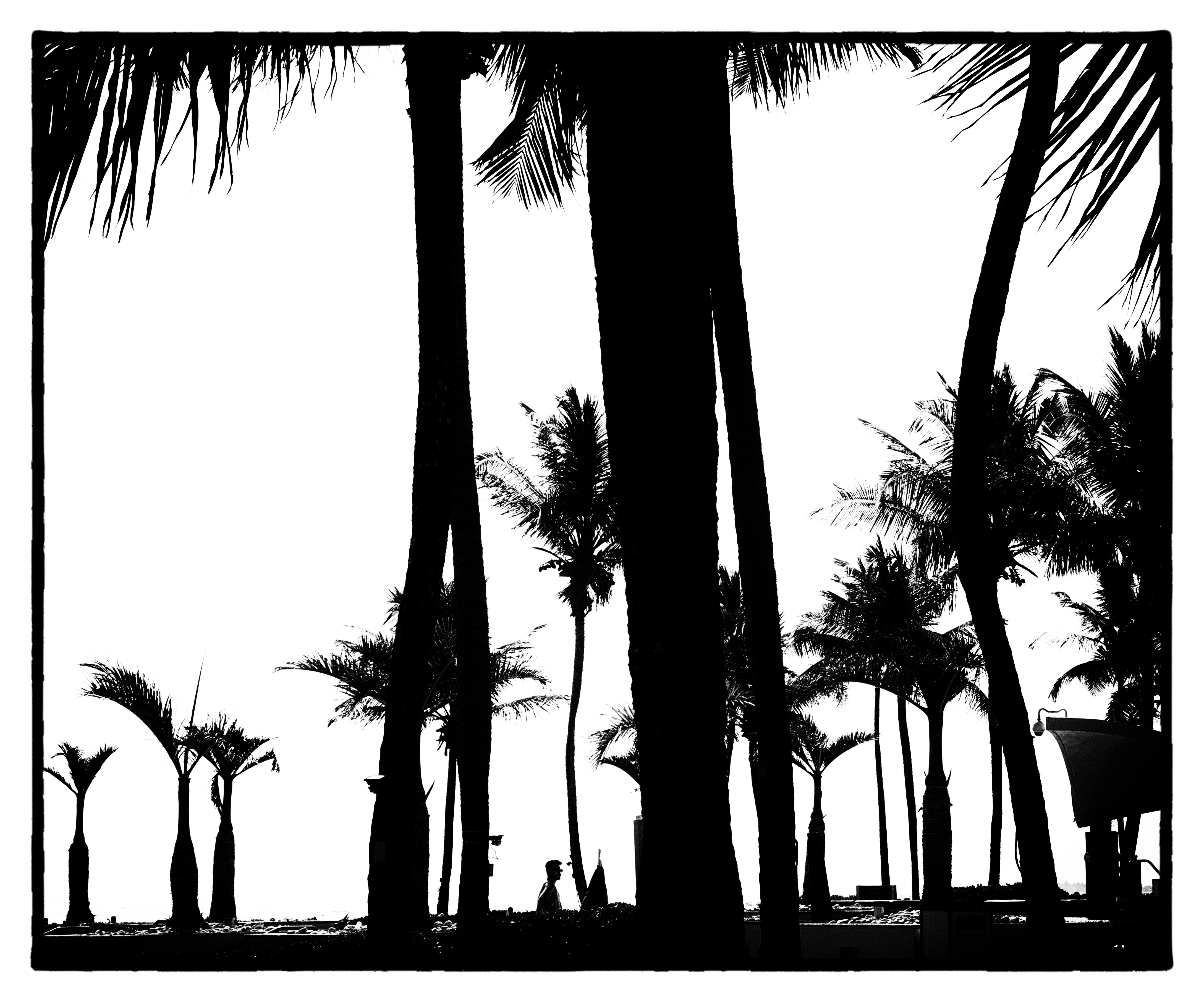 Palm beach in black and white